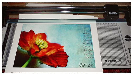 Red -Dahlia-Print-how-i-got-over-my-photography-fear-blogger-photographer-photography-i-heart-photos-debbie-eschoe